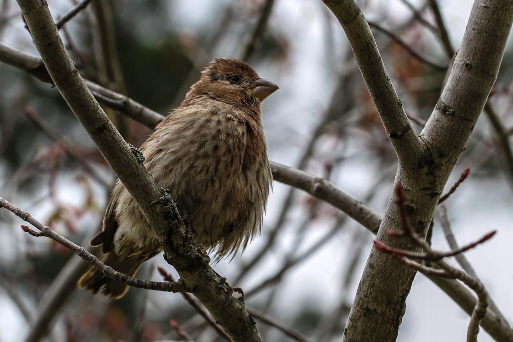 my bird friend